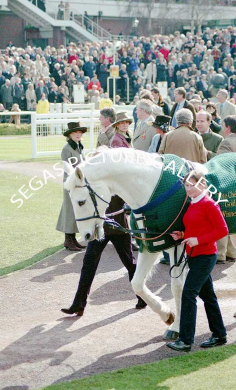 Racehorse Desert Orchid @ Cheltenham 17th March 2004